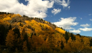 Aspens aflame in the Colorado Rocky Mountains.