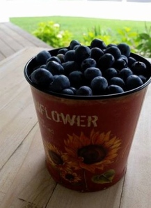 Freshly picked blueberries at Becca's farm in Cape Cod.